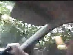 Doggingin car and forest Thumb